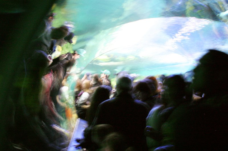 Aquarium Tunnel    (click for previous picture)
