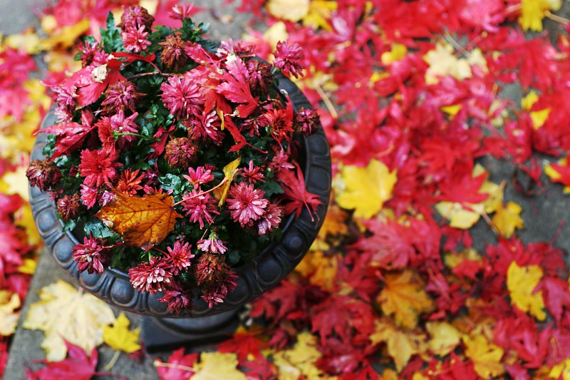 Autumn planter    (click for previous picture)