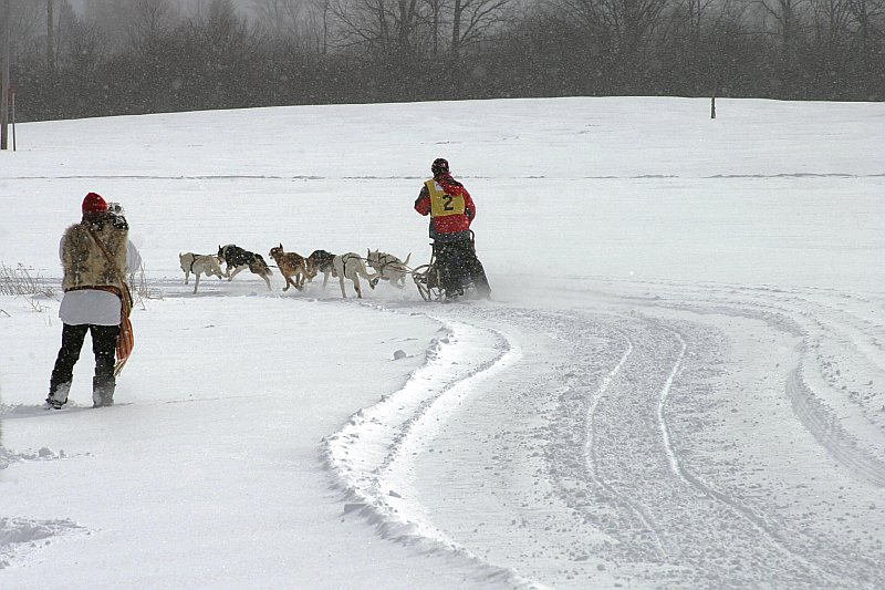 Dogsled race run    (click for previous picture)