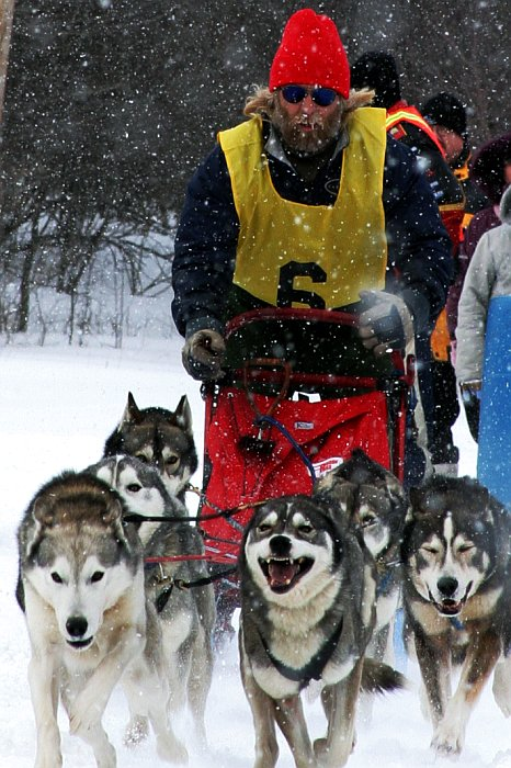 Dogsled race start    (click for previous picture)