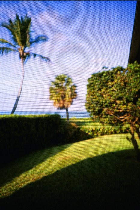 Florida screen    (click for previous picture)
