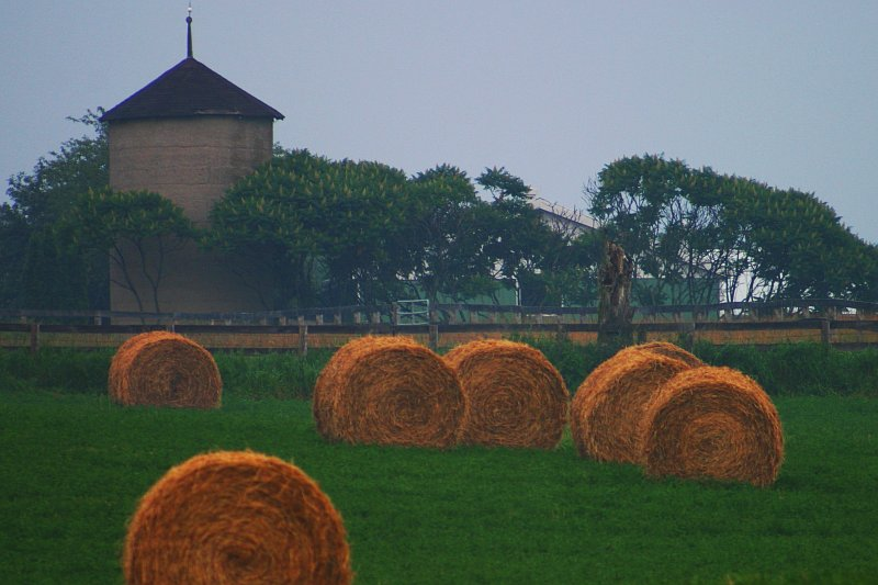 Hay! Hay! Hay!    (click for previous picture)