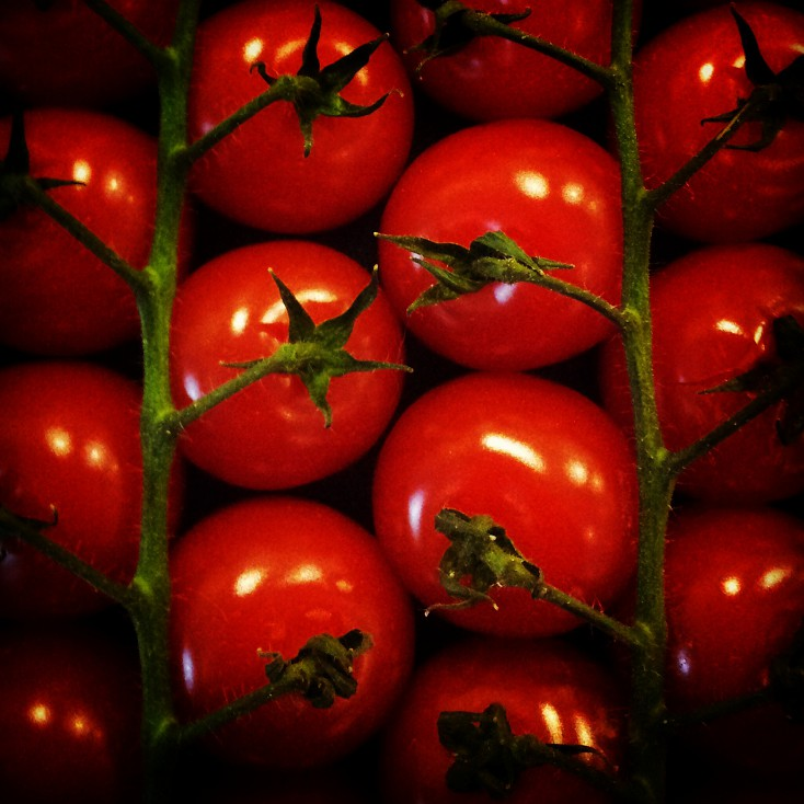 Red tomatoes    (click for previous picture)