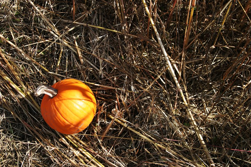 October pumpkin    (click for previous picture)