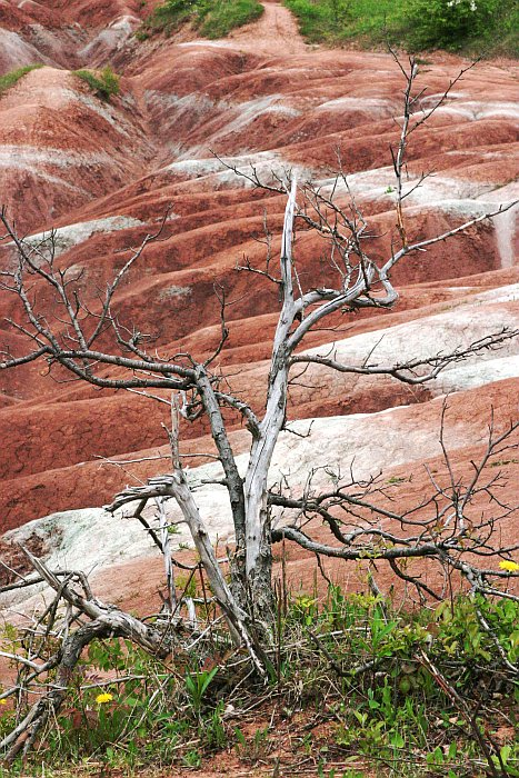 Cheltenham Badlands    (click for previous picture)