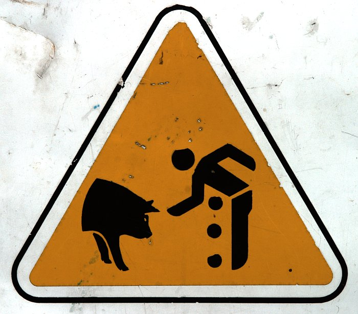 Pig warning    (click for previous picture)