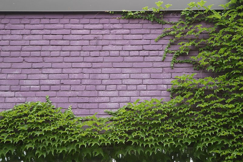 Violet wall    (click for previous picture)