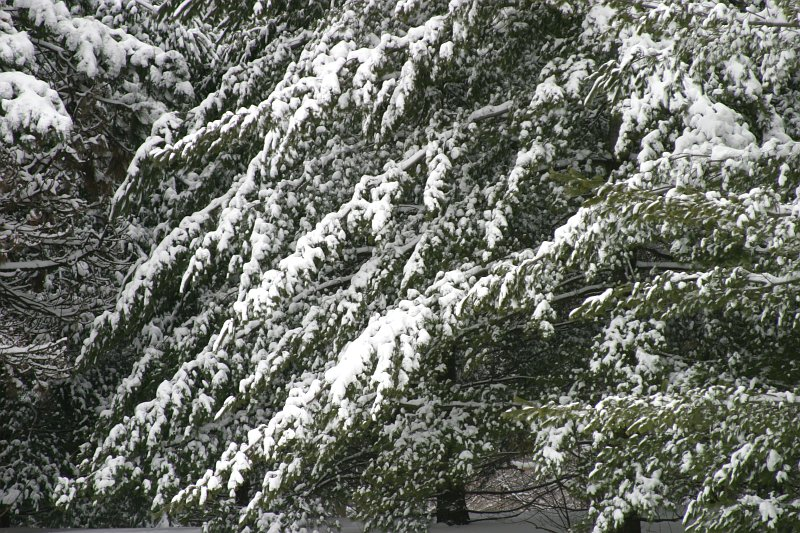 Sherwood Park Winter Trees 2    (click for previous picture)