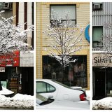 Yonge Street winter trees